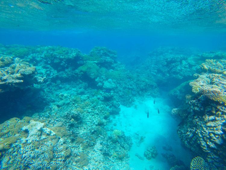 Où faire du snorkeling à Aqaba
