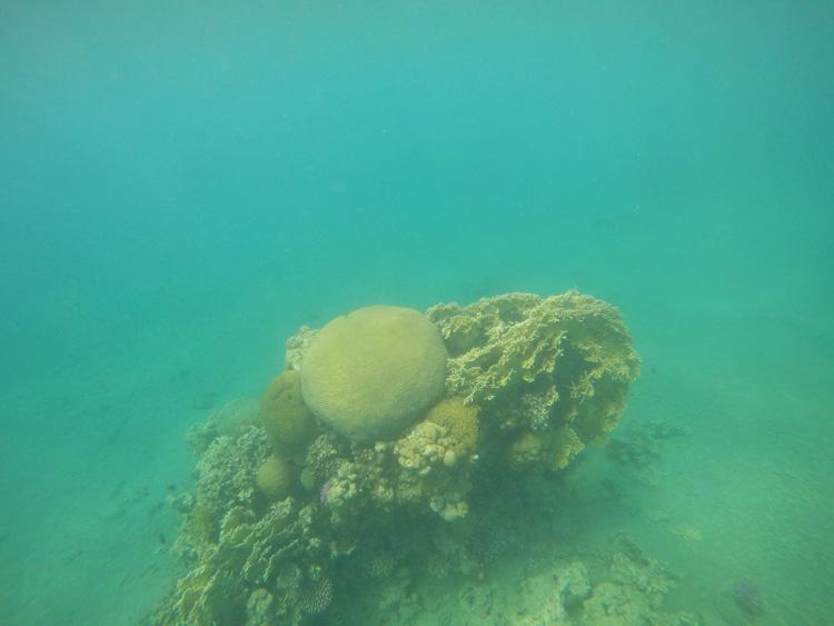 snorkeling-aqaba-mer-rouge