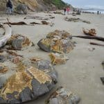 moeraki-boulders-eclats