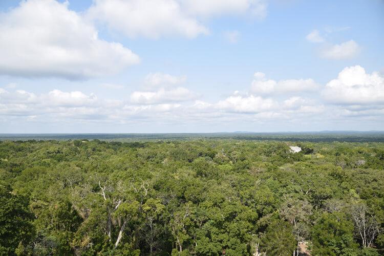 canopée-calakmul