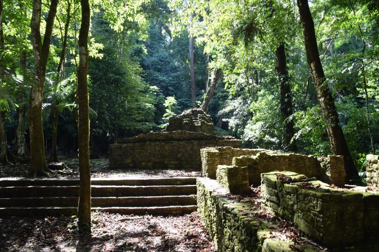 palenque-foret