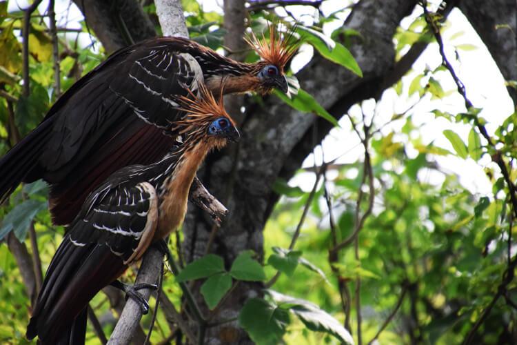 Parc national Madidi oiseaux