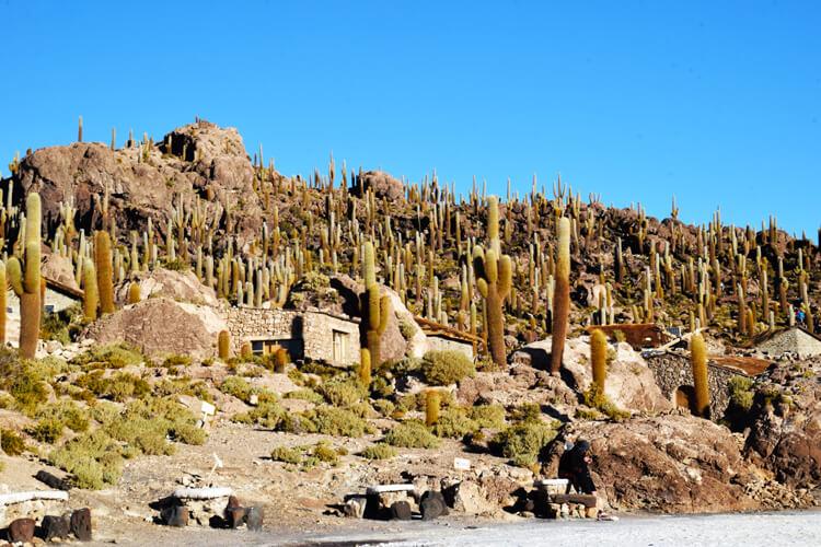 Salar de Uyuni île des cactus