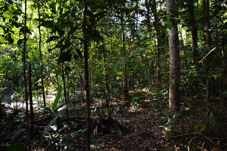 Amazonie forêt