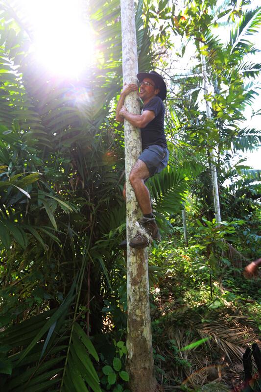Monter arbre