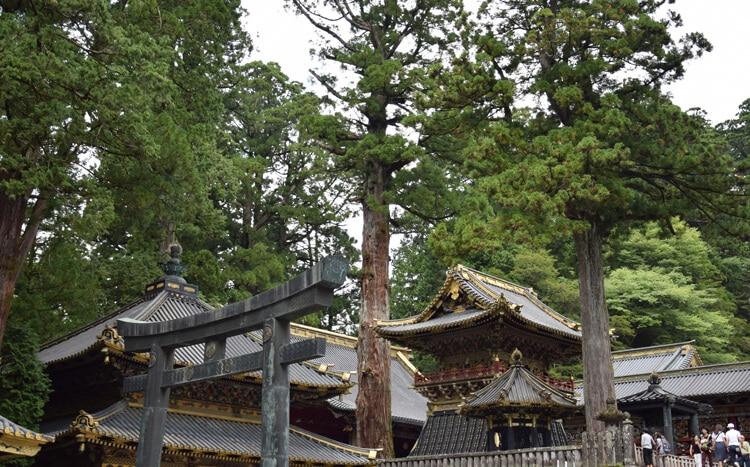 Nikko cour