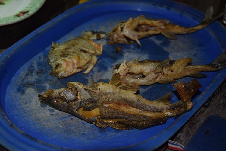 piranha-cuit