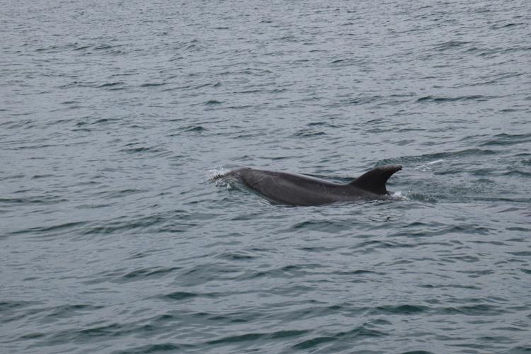 dauphin-nouvelle-zelande-1
