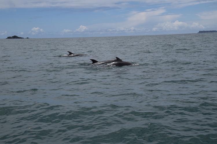 dauphin-nouvelle-zelande