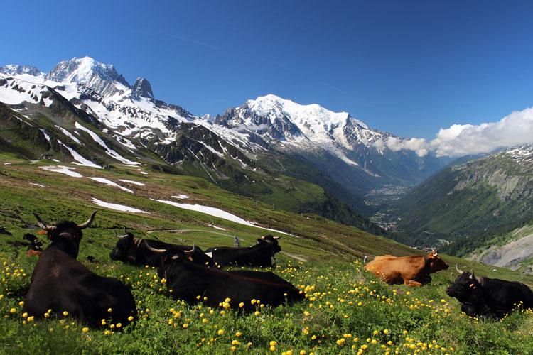 Les plus beaux treks du monde le tour du Mont Blanc
